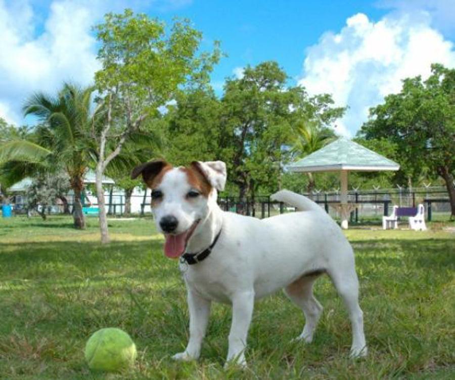 Timp Dog Park