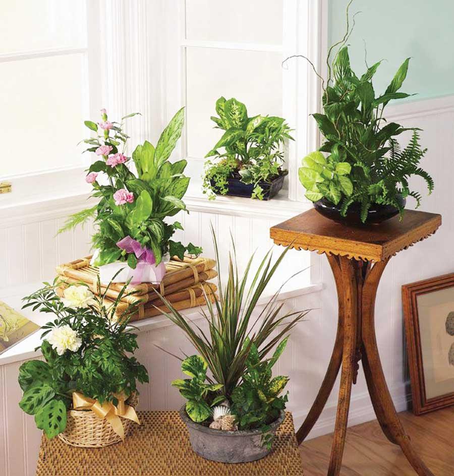 Cum ngrijim plantele de interior pe timp de iarn for Plante de interior